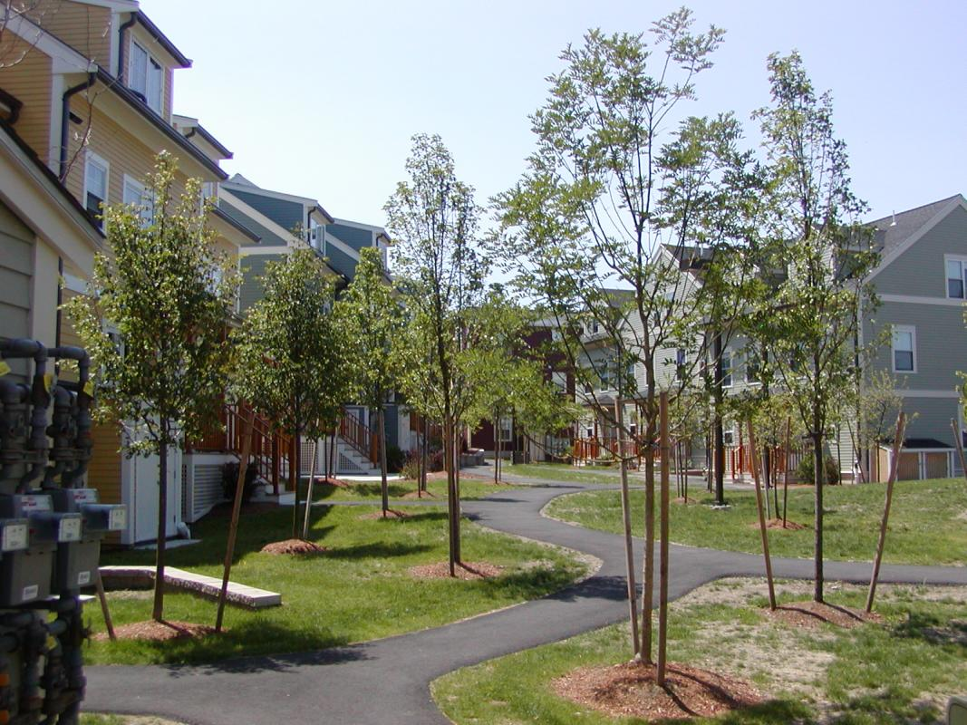 Green space with trees flanked by houses